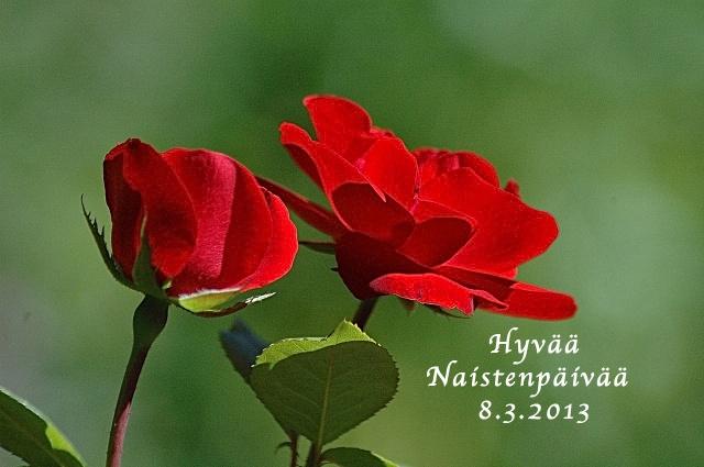 Naistenpäivänä 8.3.2013